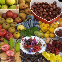 Voedselbos Ketelbroek oogst